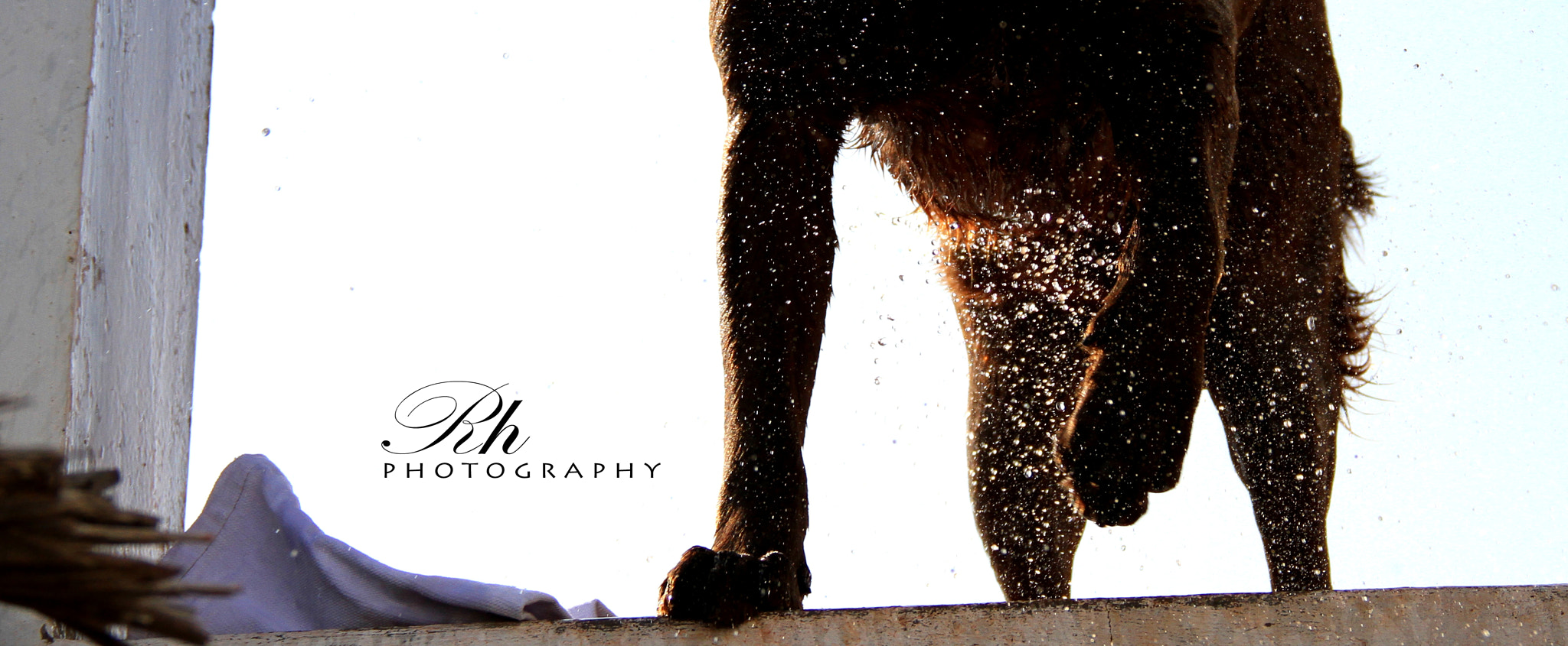 Photograph Doggy by Harson B.N.K on 500px