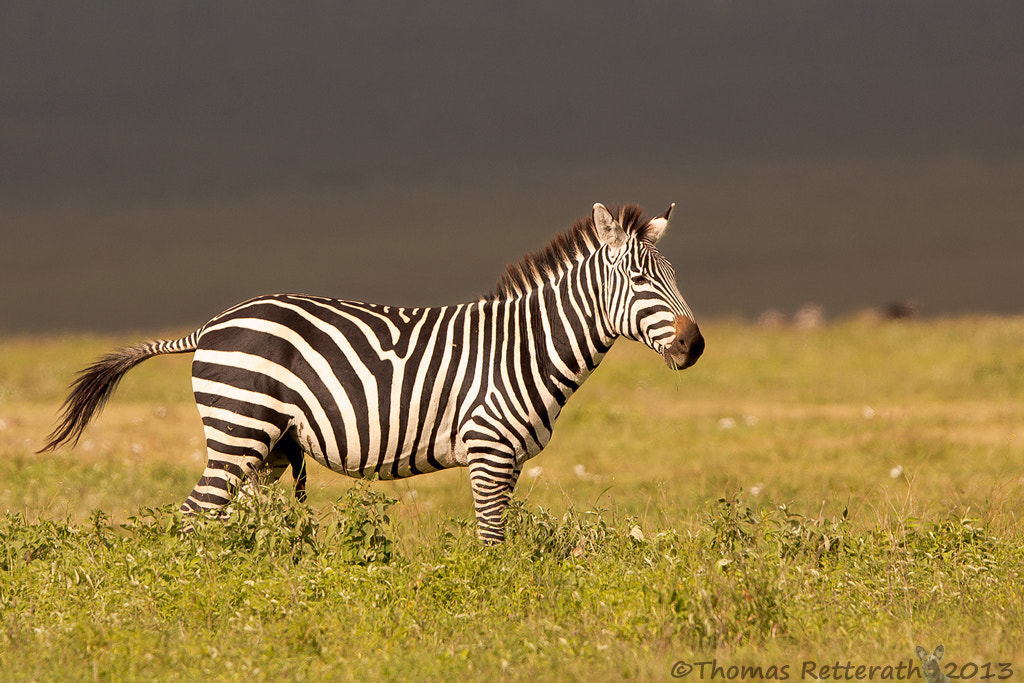 Photograph Ngorongoro Crater by Thomas Retterath on 500px