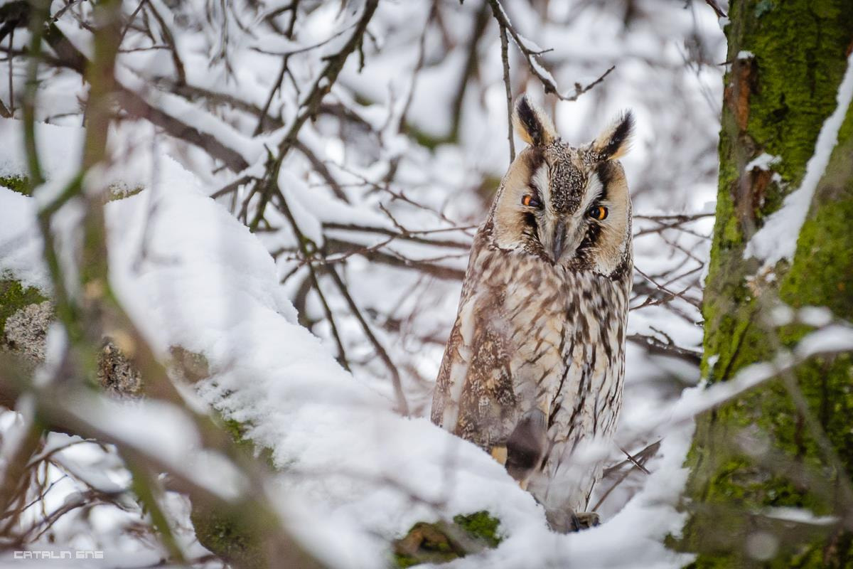 Photograph Guardian owl by Ene Catalin on 500px