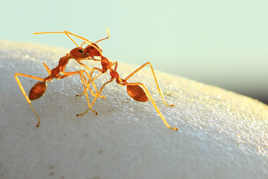 Photograph romantic ant by Agung Prayoga on 500px