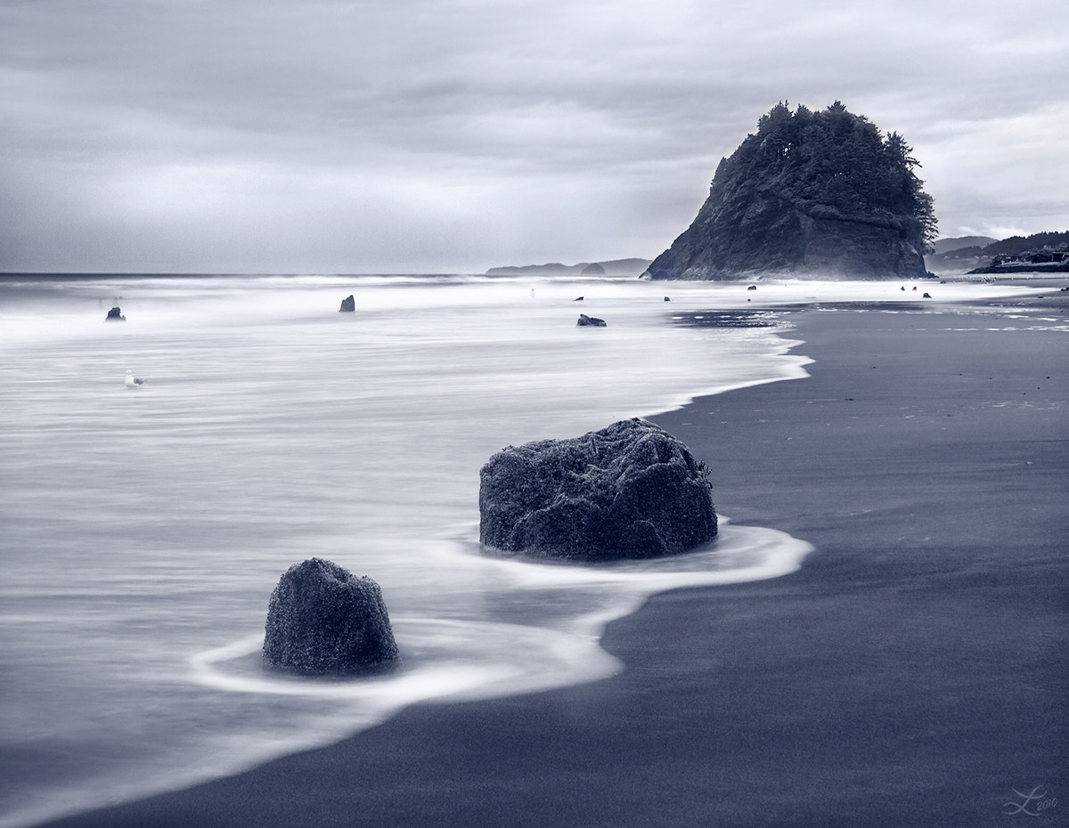 Photograph Ghost Forest of Neskowin by Laura Knauth on 500px