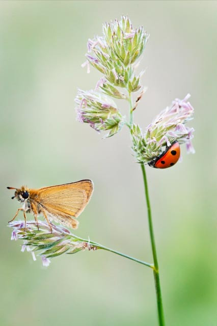 Photograph Butterfly and Lady Bird. by Alexander Hare on 500px