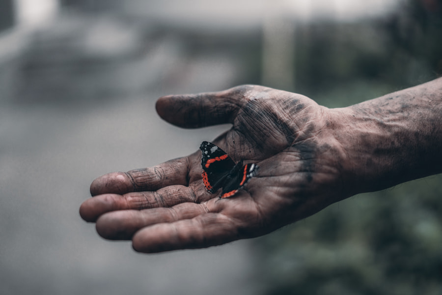 dirty man's hand holds a beautiful butterfly by Elijah Kolodribsky on 500px.com