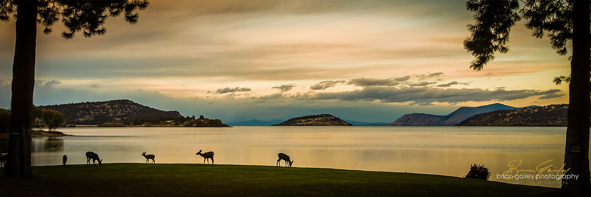 Photograph Summer Deer at Sunset by Brian Gailey on 500px