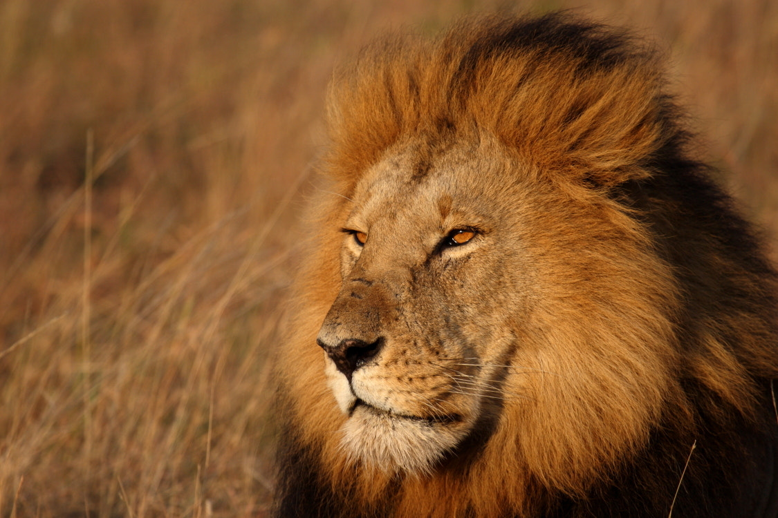 Photograph The king by Thomas Selig on 500px