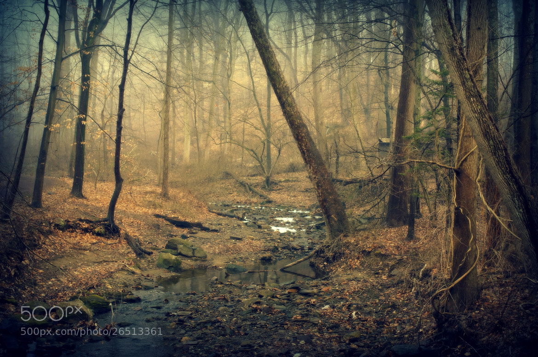 Photograph Mild Winter by Allan Cabrera on 500px