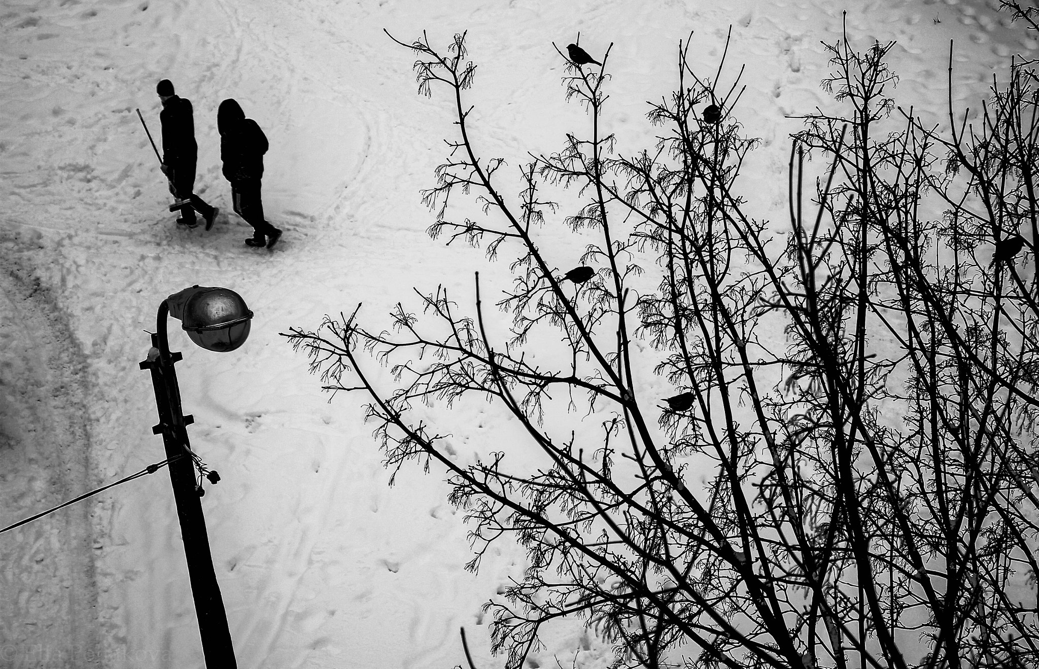 Photograph From above by Ella Poliakova on 500px