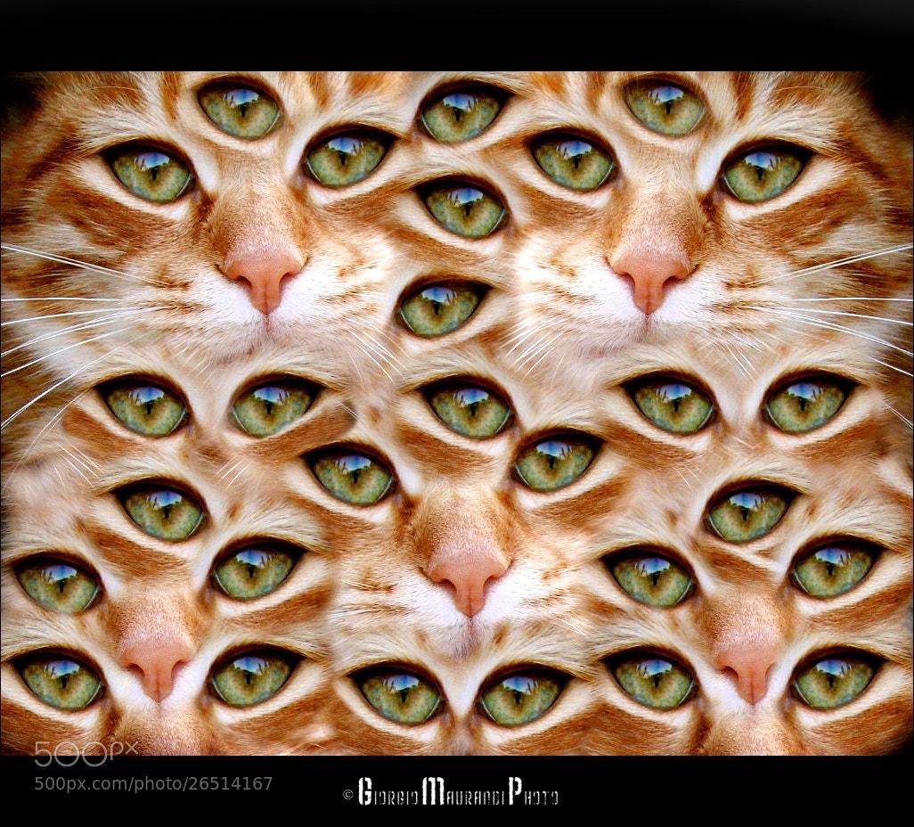 Photograph _Eyes_ by Giorgio Maurandi on 500px