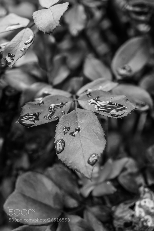 Photograph Rainy Day by Alyssa Paraggio on 500px