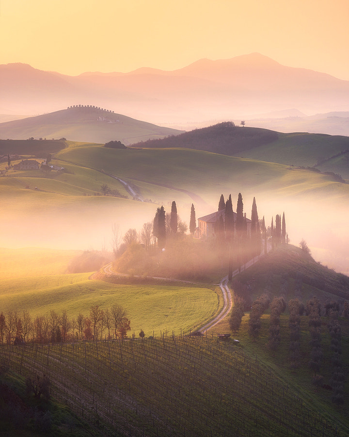 Golden Tuscany by Daniel Fleischhacker on 500px.com