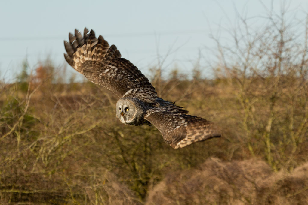 Photograph Great Grey Owl by Pat Walker on 500px