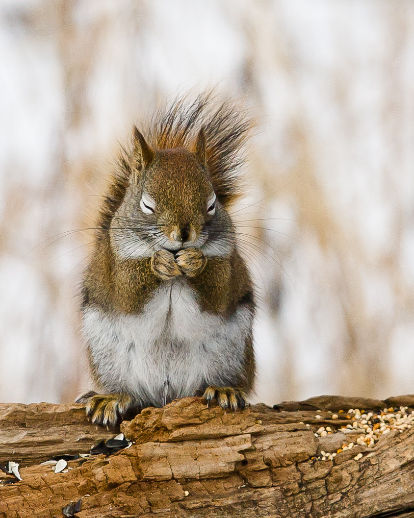Photograph Giggling Squirrel by Marty Allinson on 500px