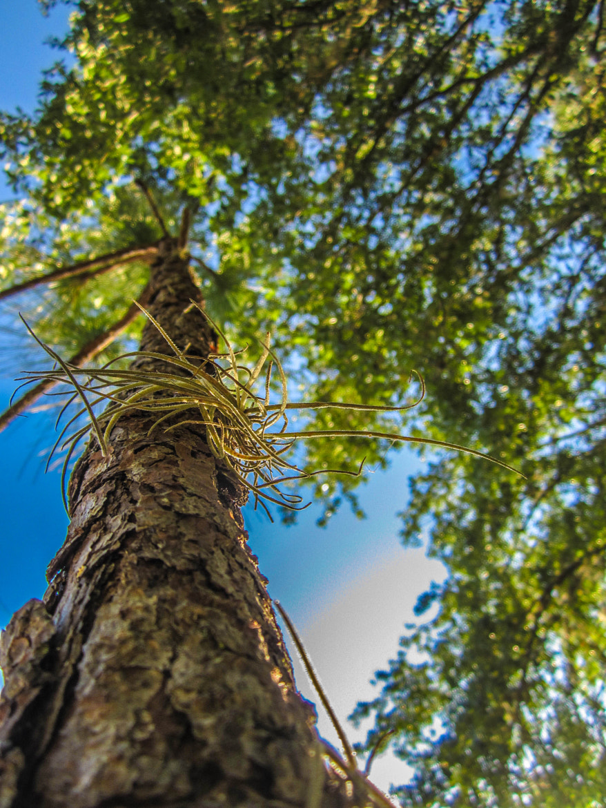Photograph View from the Bottom by Alyssa Paraggio on 500px