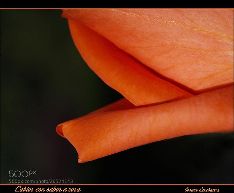 Photograph Labios con sabor a rosa by Josune Etxebarria on 500px