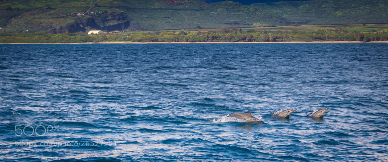 Photograph Kauai - 13 by Paul Howard on 500px