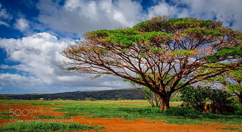 Photograph Kauai - 28 by Paul Howard on 500px