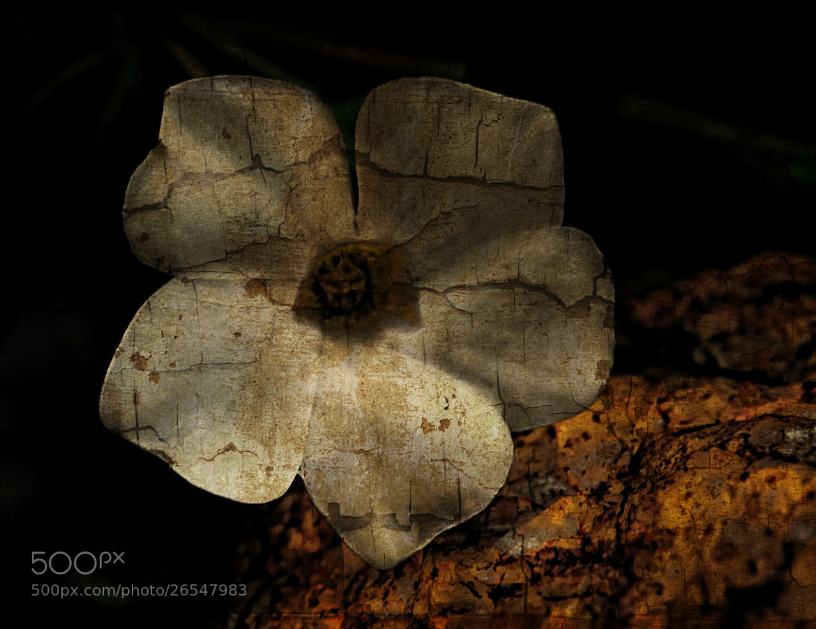Photograph Vinca by Begoña Garcia on 500px