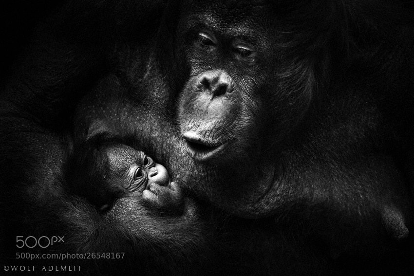 Photograph HEY BABY by Wolf Ademeit on 500px