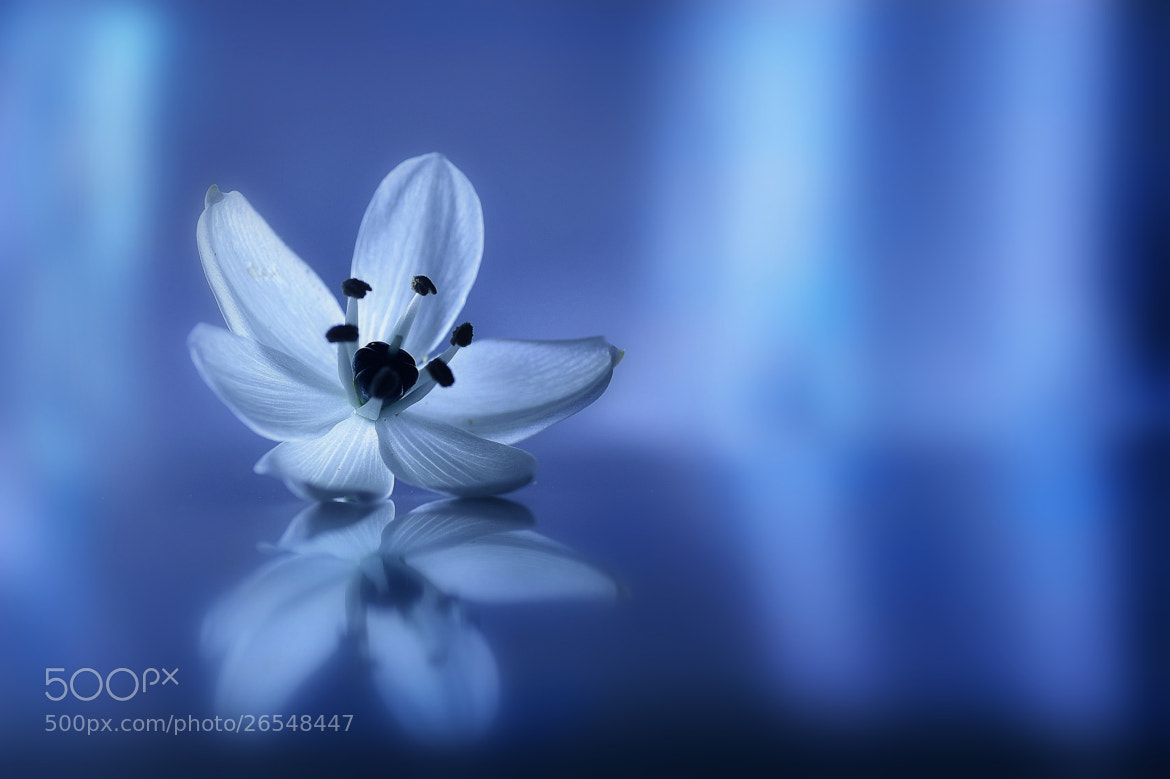 Photograph Sentimental pale blue by Lafugue Logos on 500px