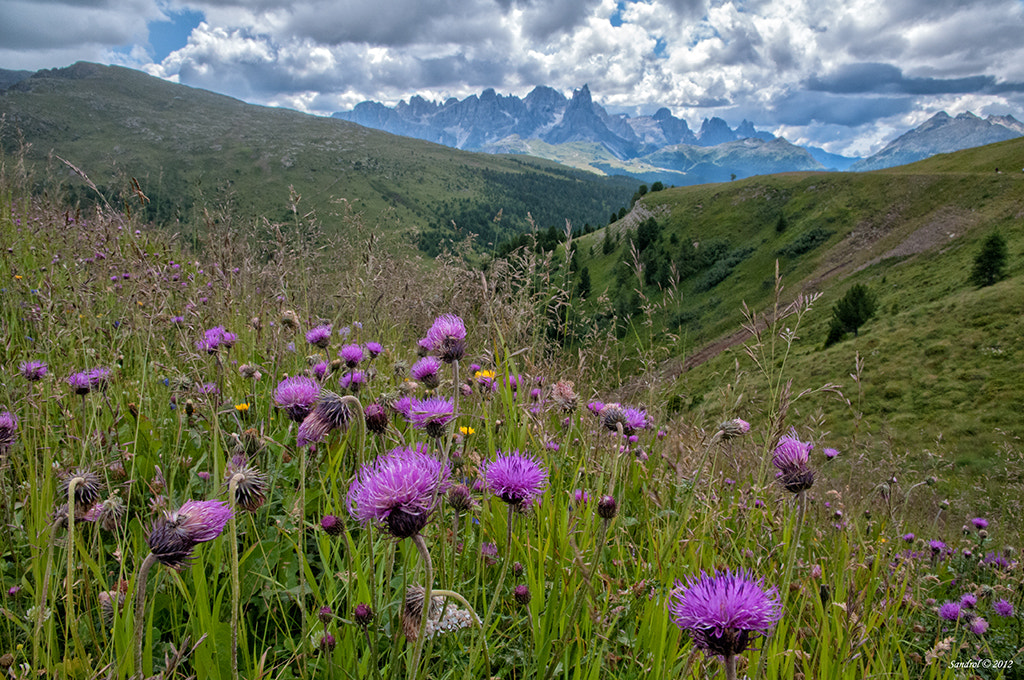 Photograph Alpe Luisia by Sandro L. on 500px