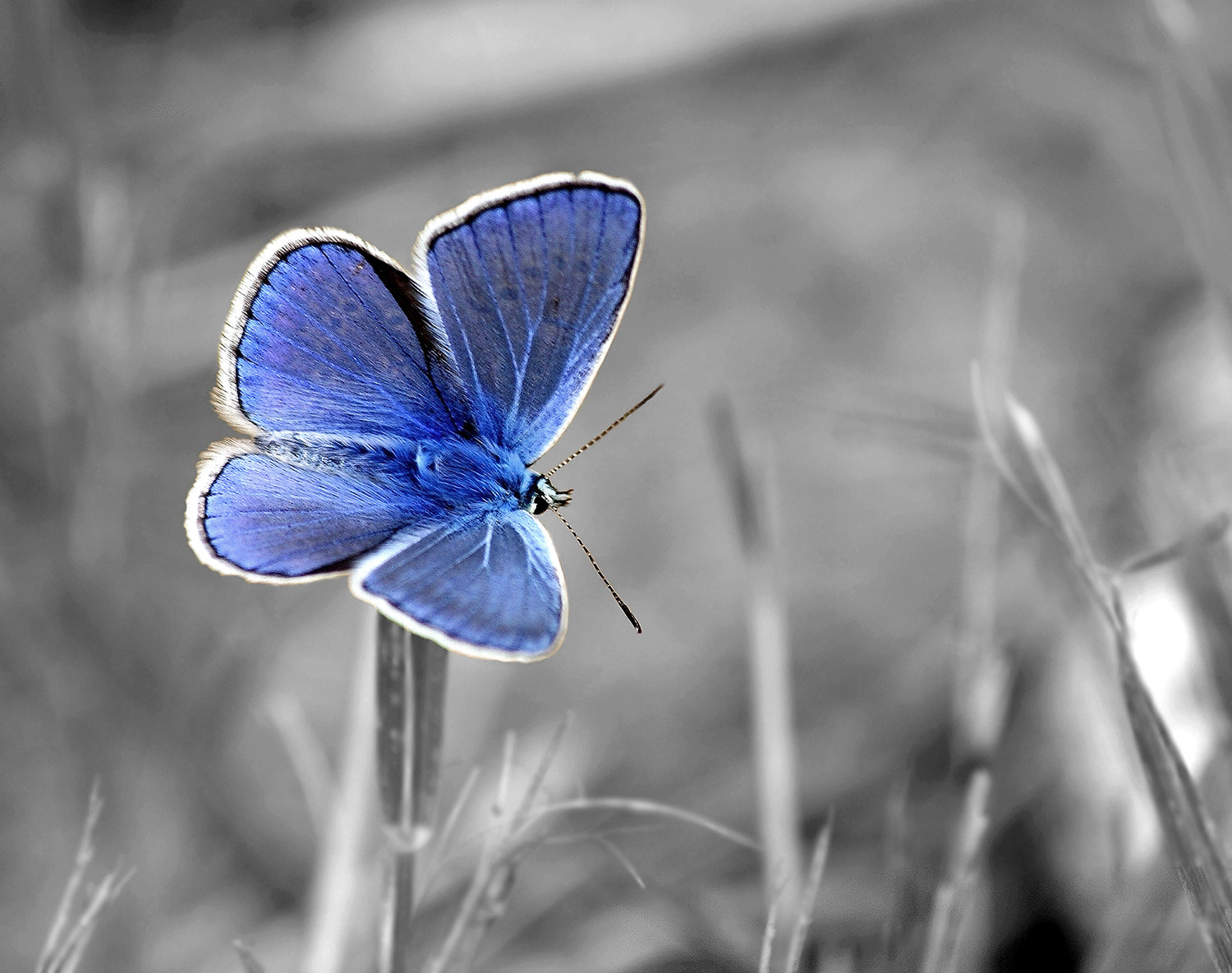 Photograph Blue by Andy 58 on 500px