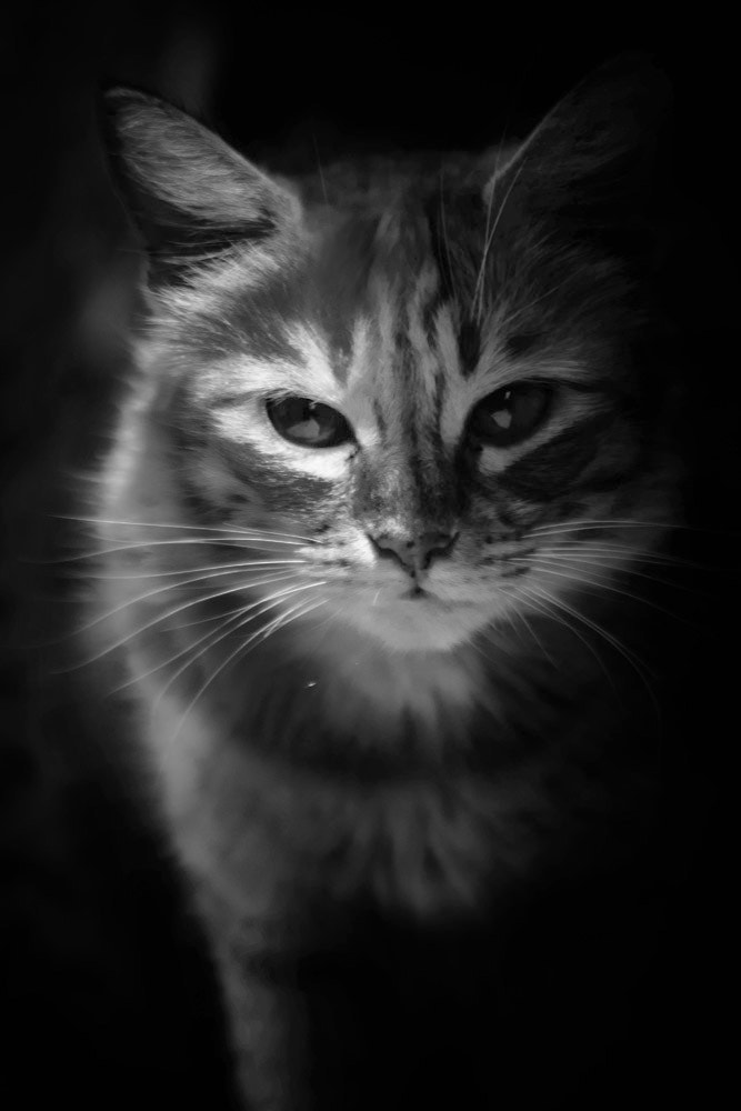 Photograph puss with looks by Vinod Raj on 500px