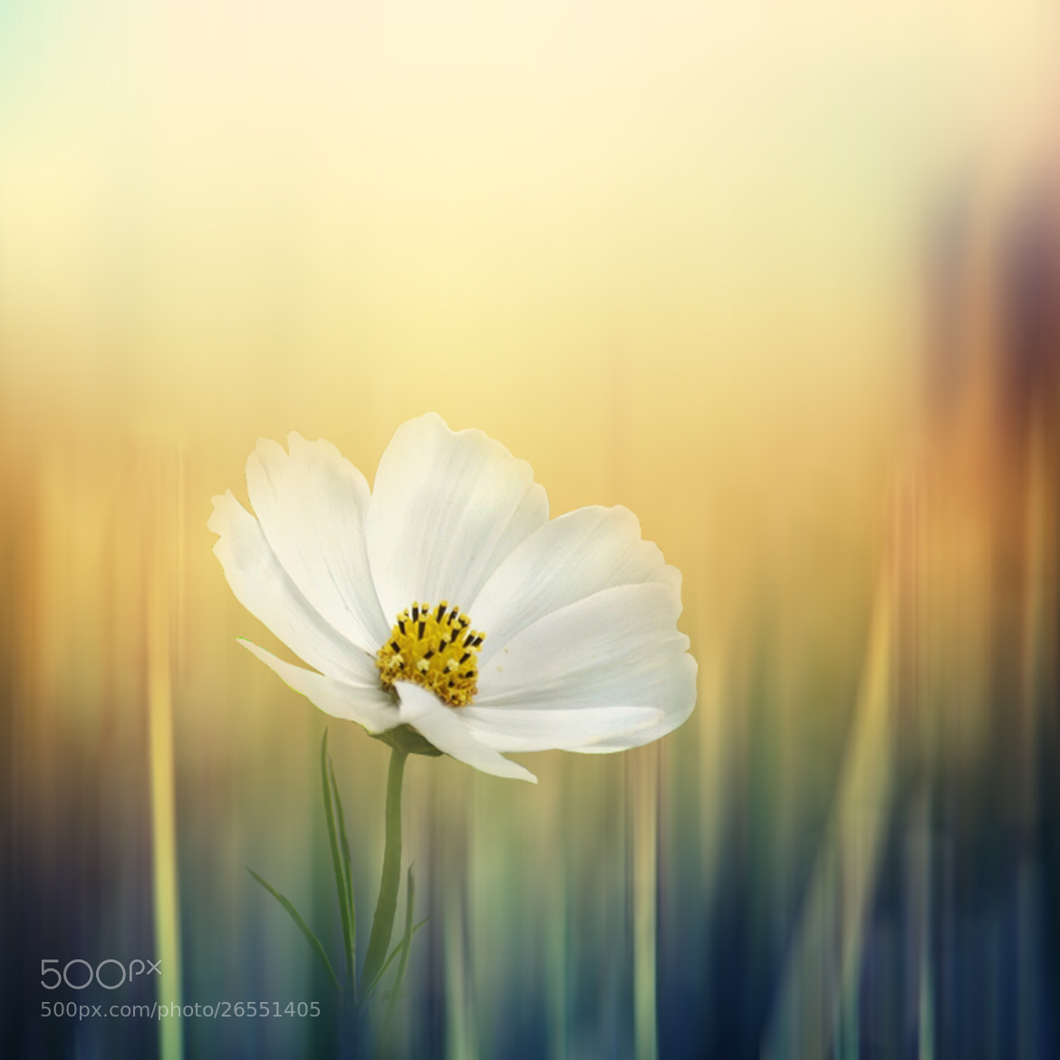 Photograph beauty in blur by Kittiwut Chuamrassamee on 500px