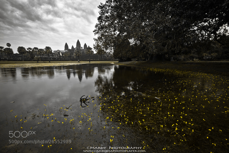 Photograph Flowers of Angkor Wat! by Mardy Photography on 500px