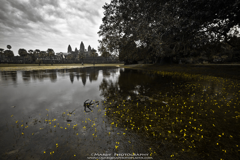 Photograph Flowers of Angkor Wat! by Mardy Suong Photography on 500px