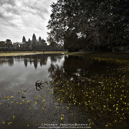 Flowers of Angkor Wat!