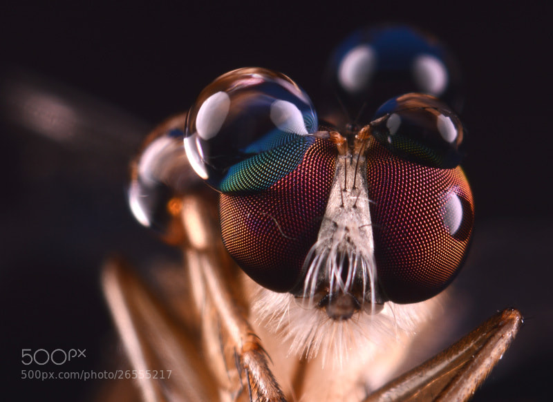 Photograph Bubble eyes by Langit Borneo on 500px