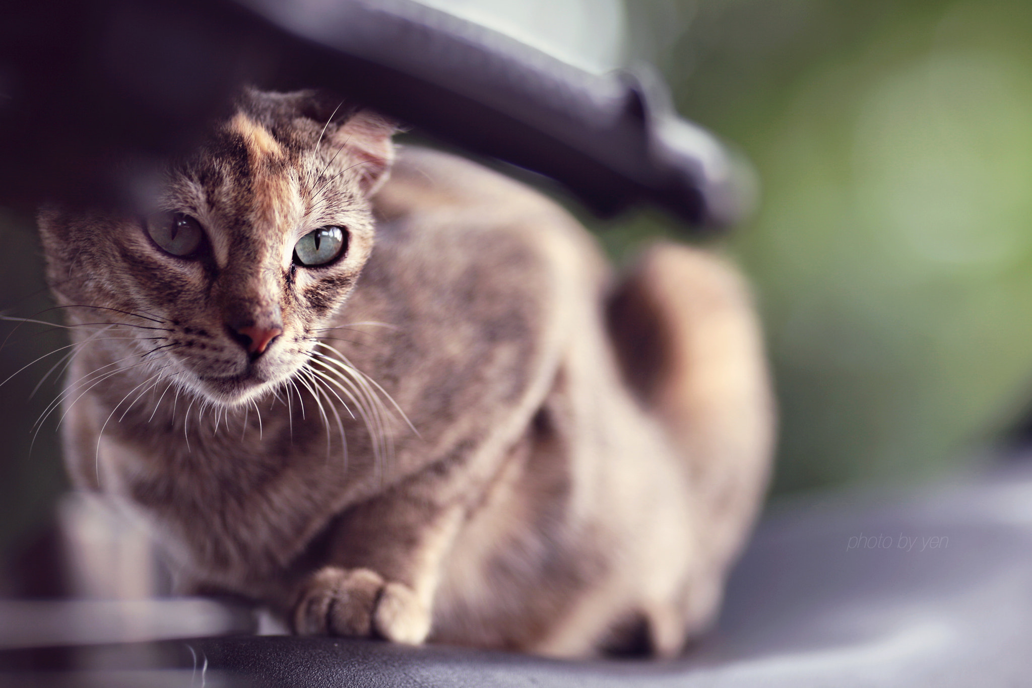 Photograph Posing Kitten by Nazrin Shah on 500px