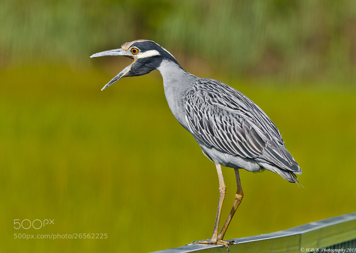 Photograph What Did You Say? by Harold Begun on 500px