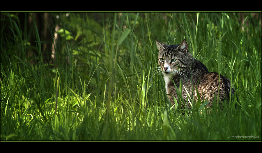 Photograph Hunting Cat.. by Martien van Hout on 500px