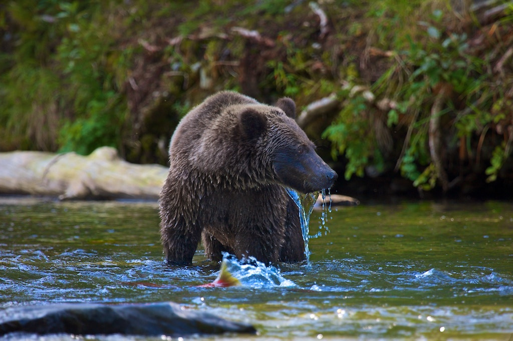 Photograph The Right One by Buck Shreck on 500px