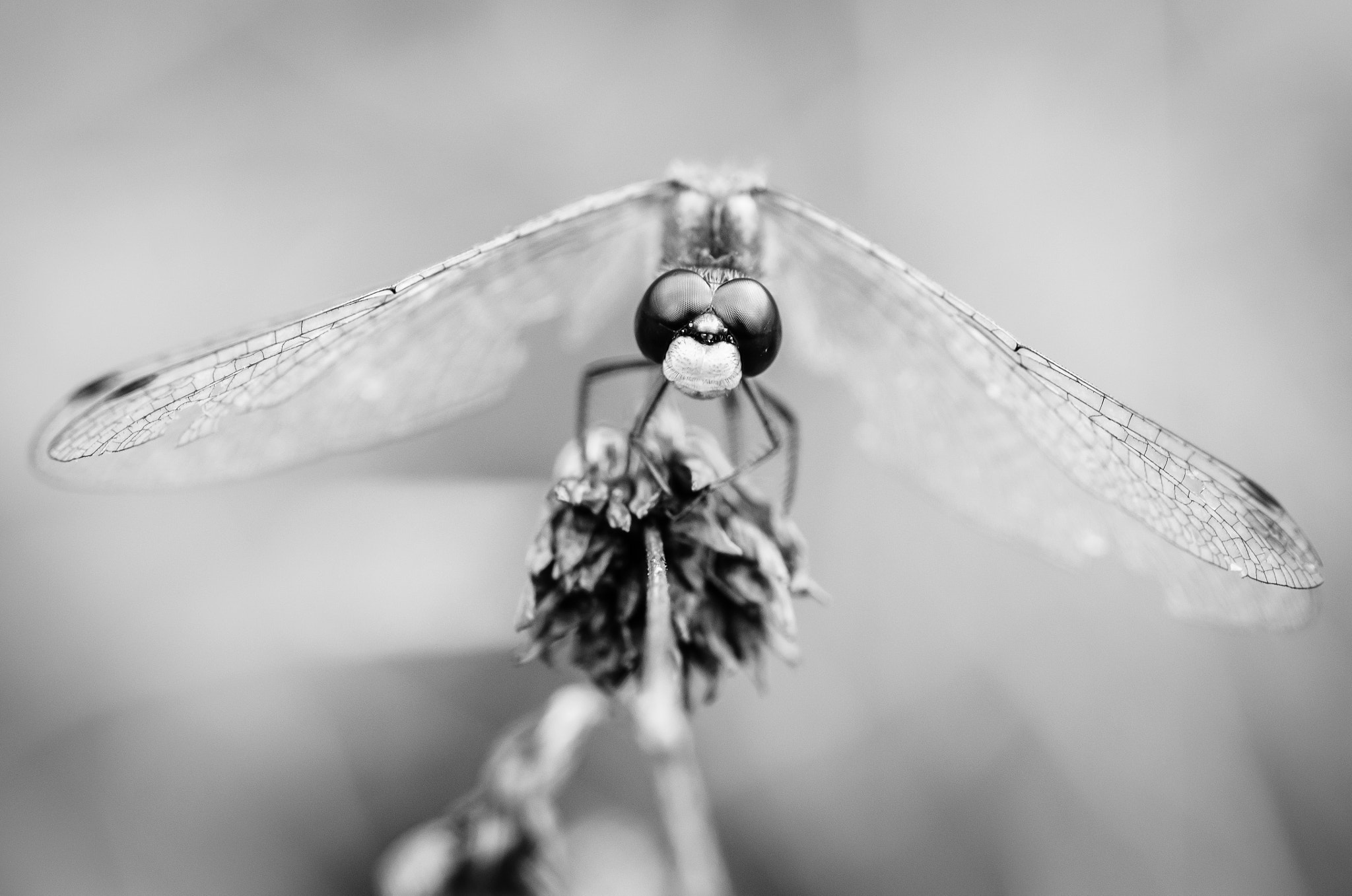 Photograph Dragonfly by Laurens Kaldeway on 500px