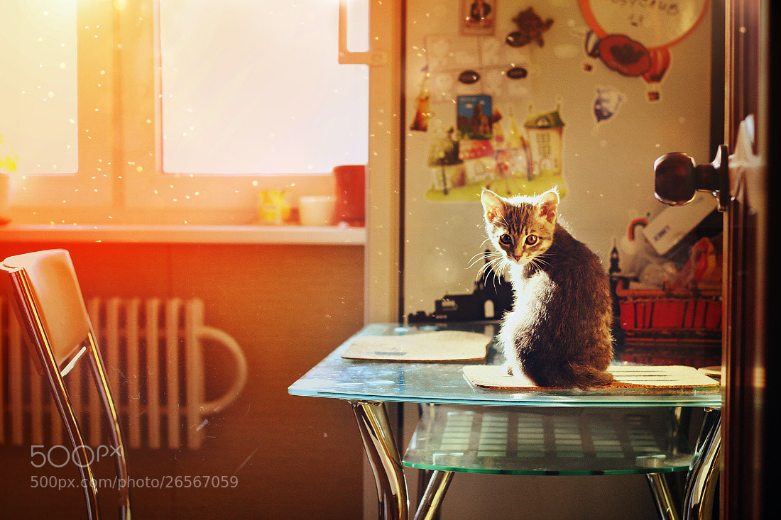 Photograph waiting for spring by Елена Серебрякова on 500px