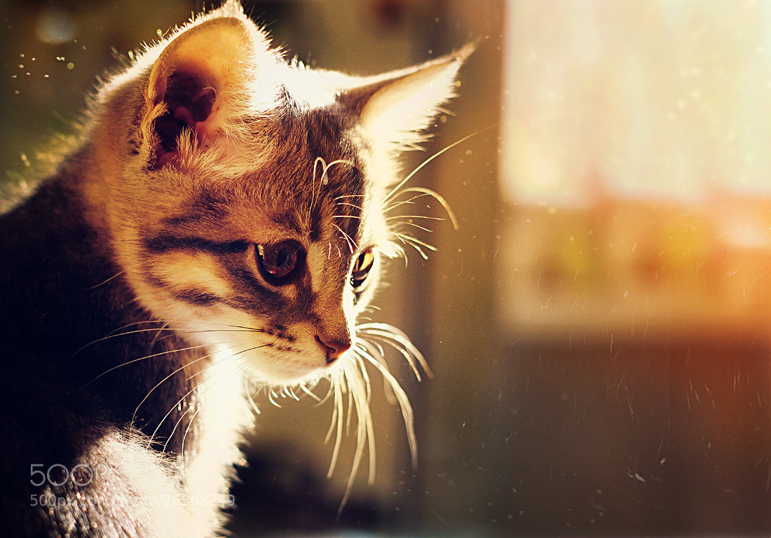 Photograph kitty girl by Елена Серебрякова on 500px