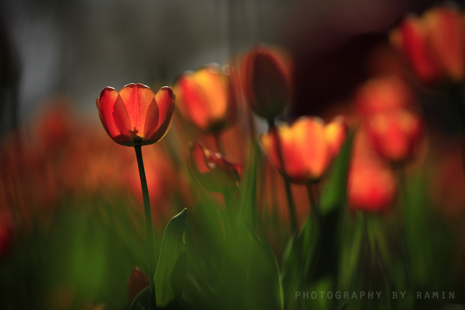 Photograph Spring ......  by Photography by Ramin  on 500px