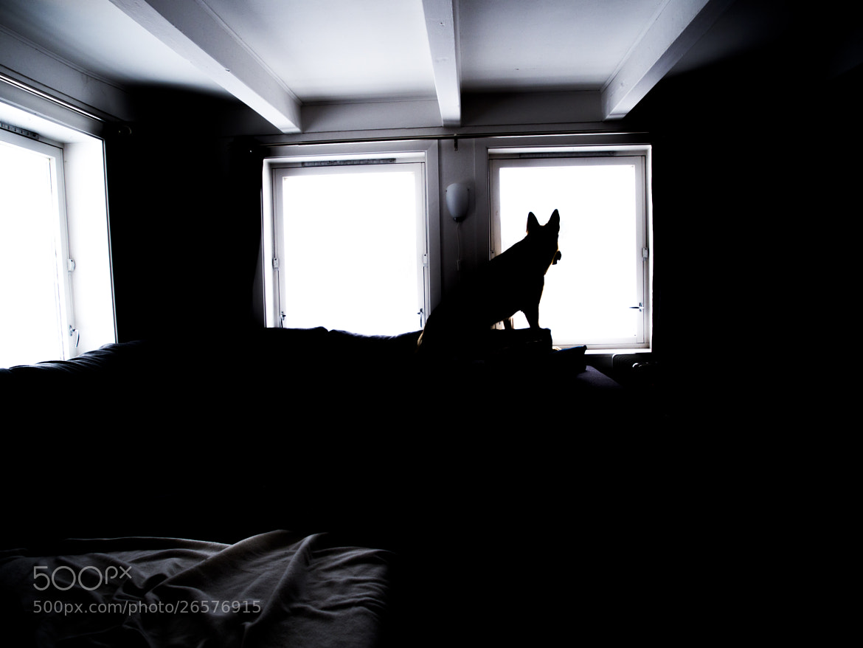 Photograph Lone Spirit by Henrik Thuesen on 500px