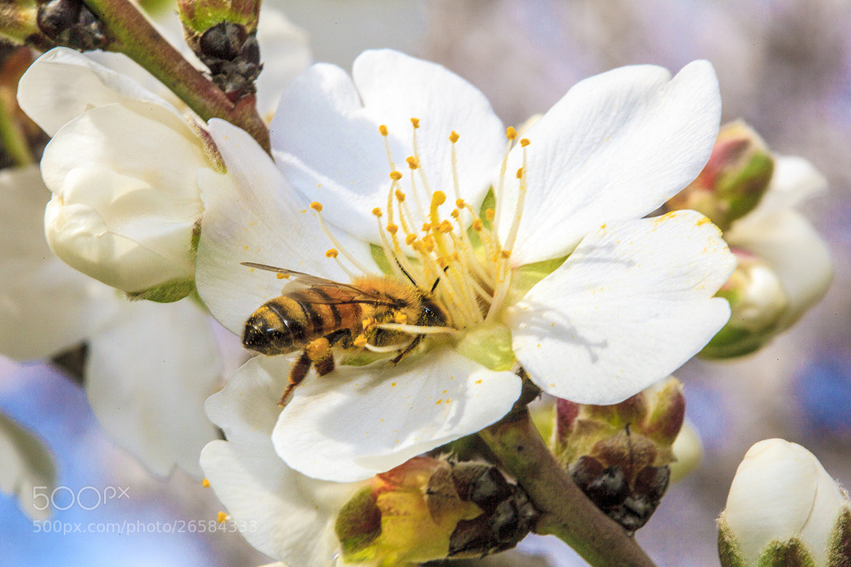Photograph My Bee by Riyad Hamad on 500px