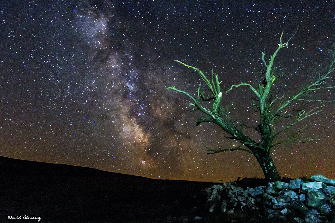 Photograph The dead tree under the star light by David Alvarez on 500px