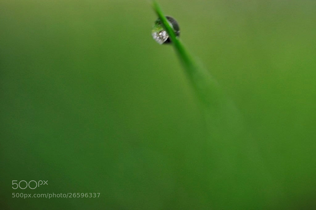 Photograph Green Drop by Jozie Klaas on 500px