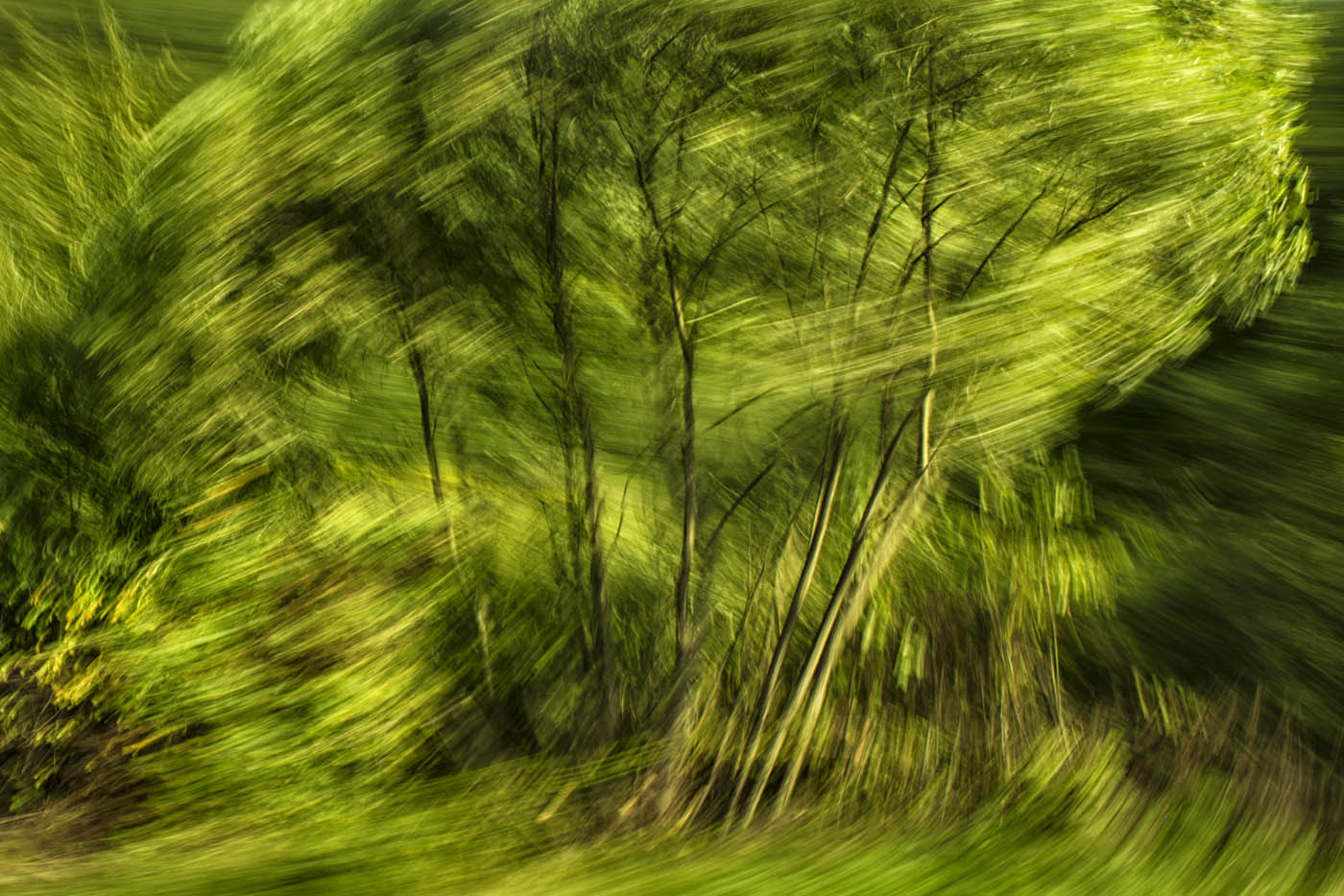 Photograph Spinning nature 2 by daniel vojtech on 500px