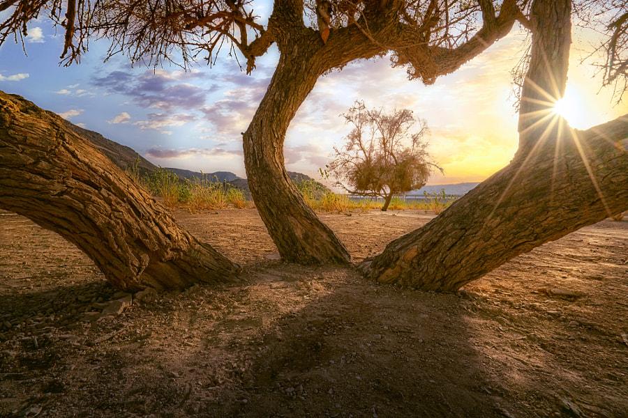 Trees, автор — Mohammed Abdo на 500px.com