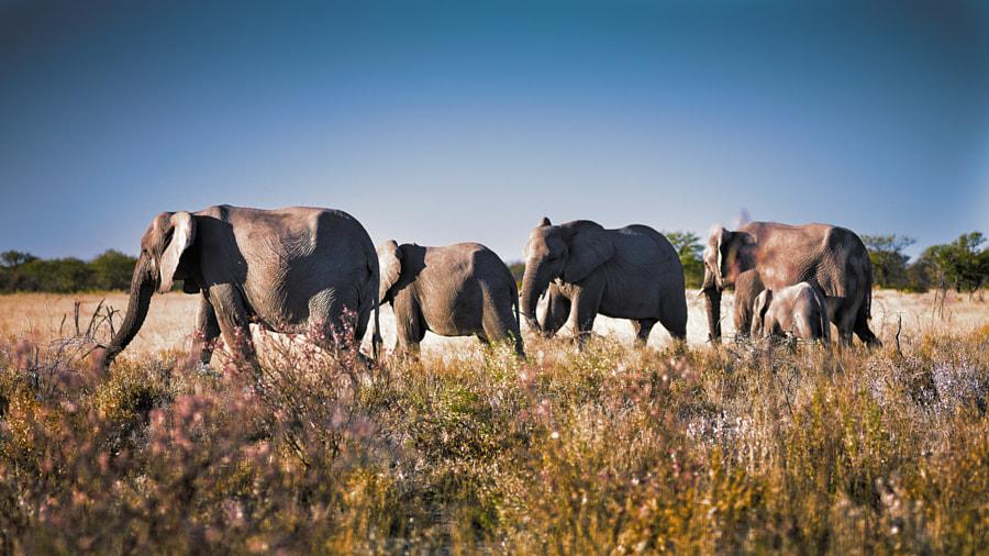 Elephant herd, автор — Thomas S. на 500px.com