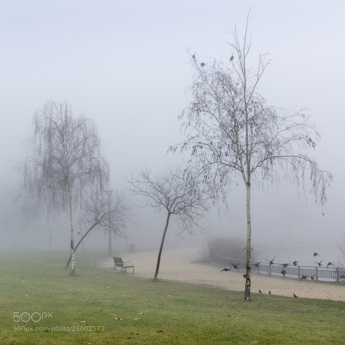 Photograph In the fog by Pilar  Azaña on 500px