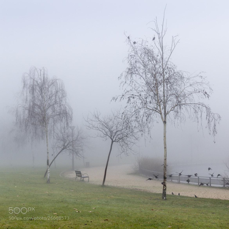 Photograph In the fog by Pilar  Azaña Talán  on 500px