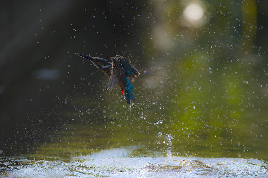 물총새, автор — Ahn . b . k  на 500px.com