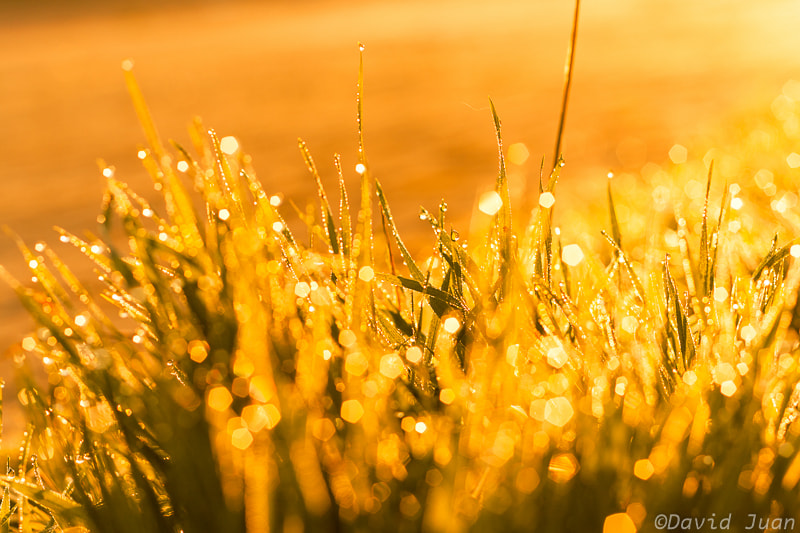 Photograph Golden bokeh by David Juan on 500px